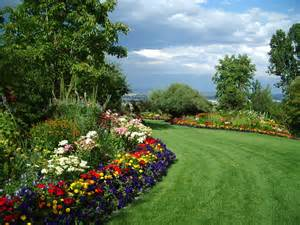 perfect summer lawn