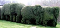 elephant blogs